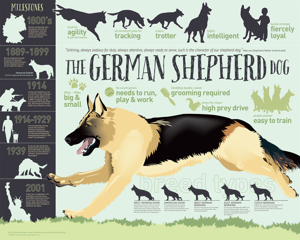 The german shepherd dog german shepherd guide picture nvjuhfo Choice Image